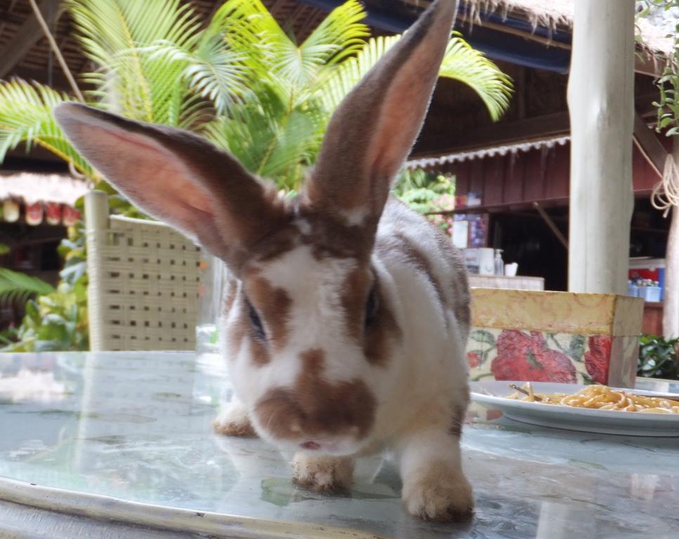 """Кролик в ресторане """"Белый кролик""""."""