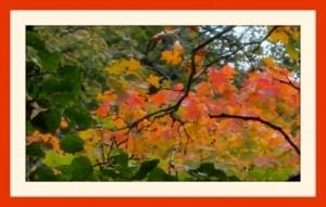 Подмосковная осень!