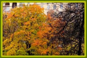 Московская осень!
