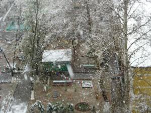 Апрельский снег в Ташкенте.