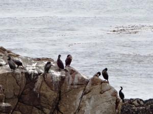 Птички на камнях в океане.
